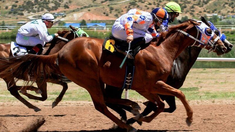Bei Pferderennen ist viel Geld zu holen.